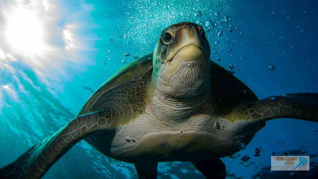 buceo tortuga tenerife