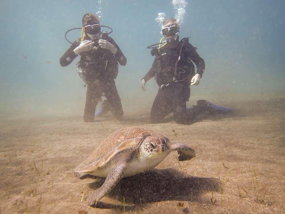 buceo tortugas tenerife