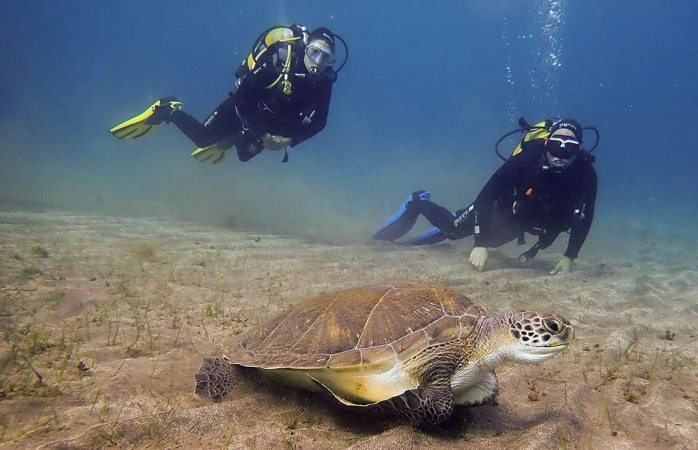 donde ver tortugas en tenerife
